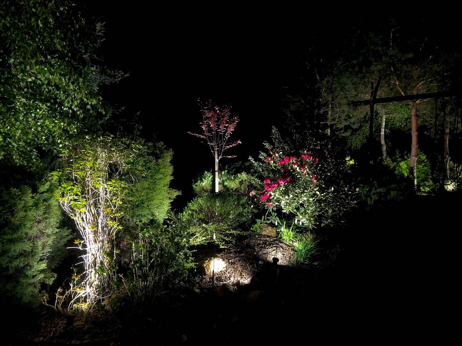 podświetlenie nasadzeń w ogrodzie