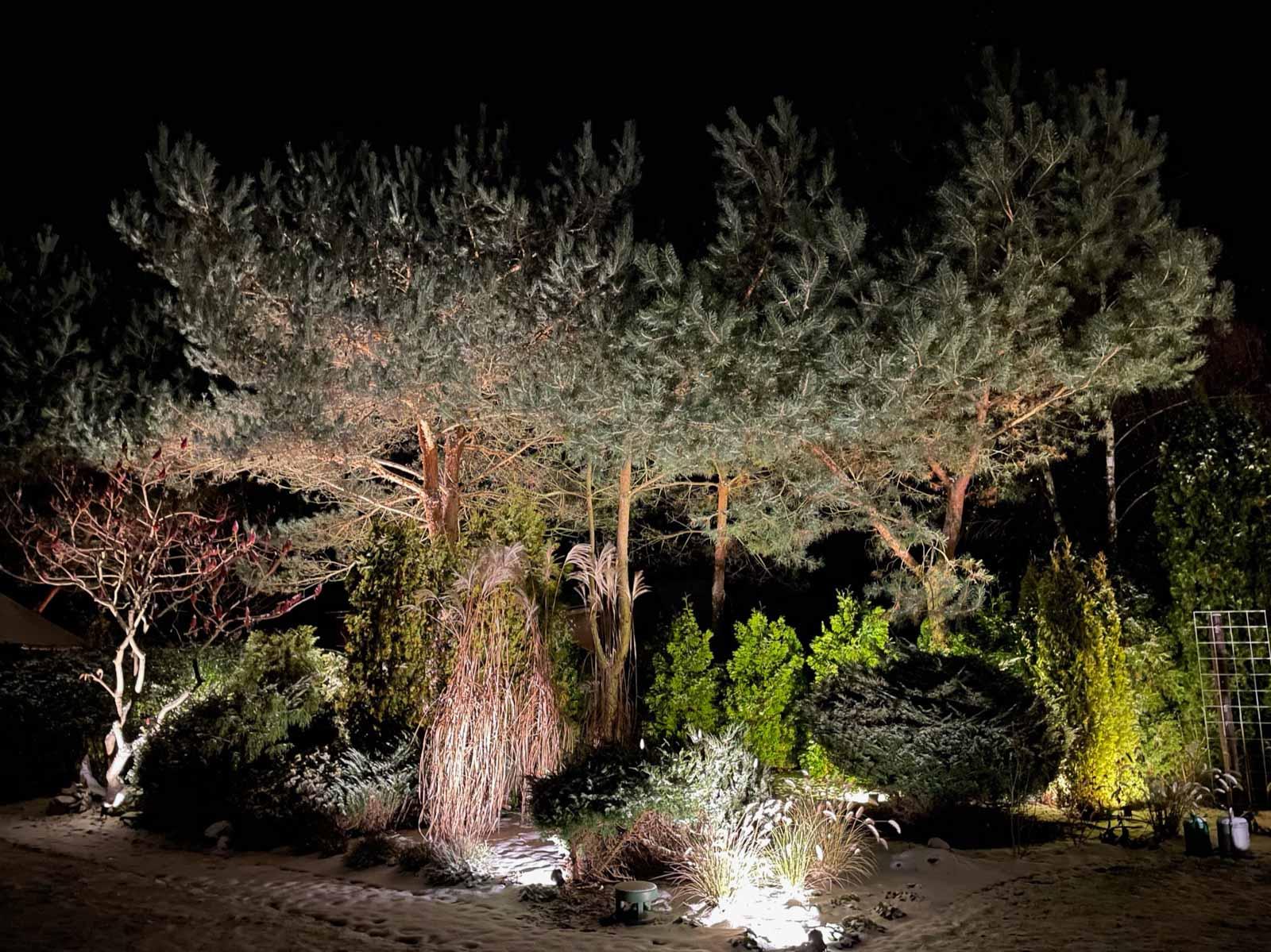lampy ogrodowe led podświetlające drzewo